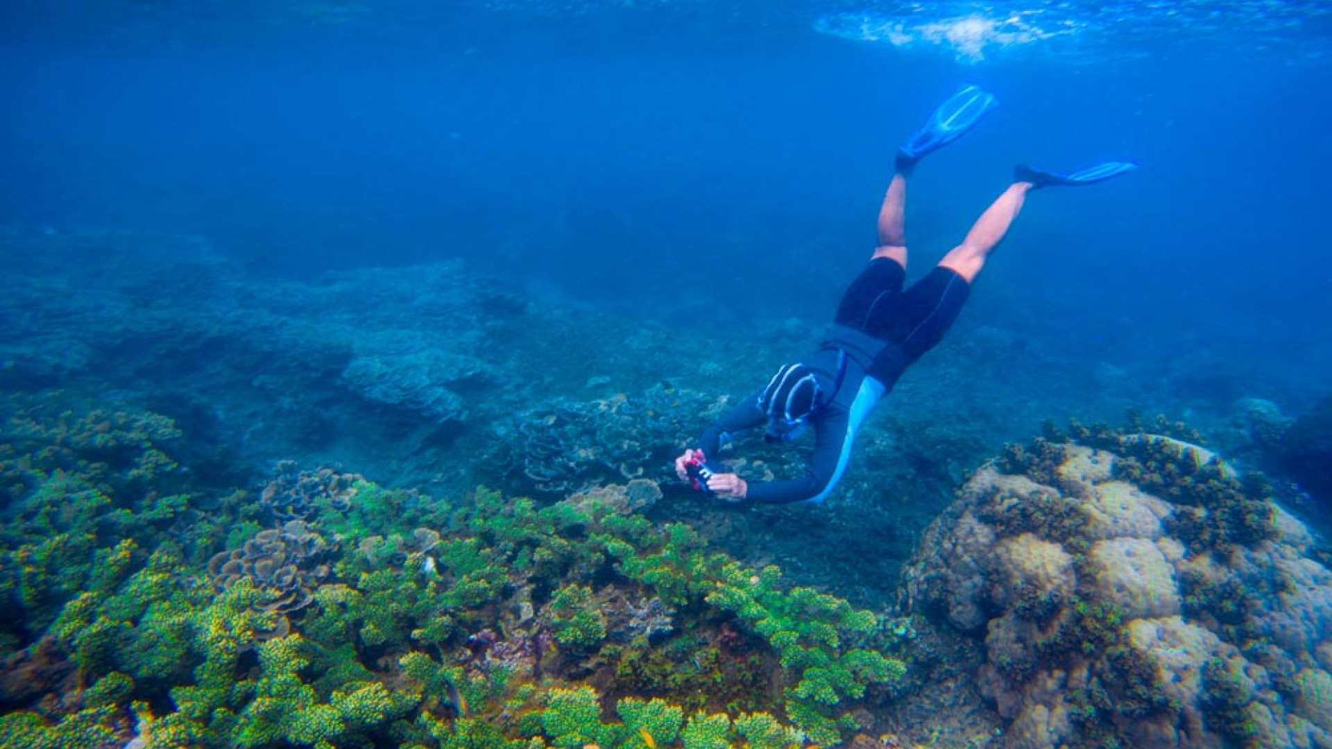 5 Must- know Snorkelling Tips for Beginners
